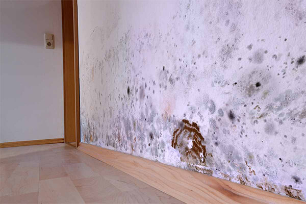 Mold Damage Restoration in Elk Mound, WI