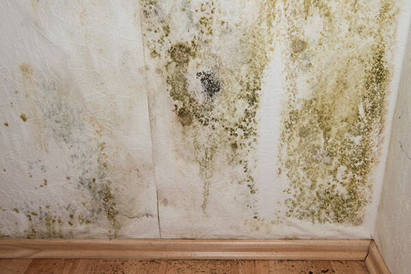 Mold Abatement in Augusta, WI