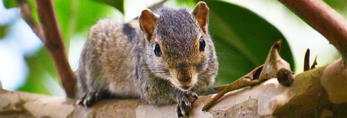 Pest Control Company in Hudson, WI